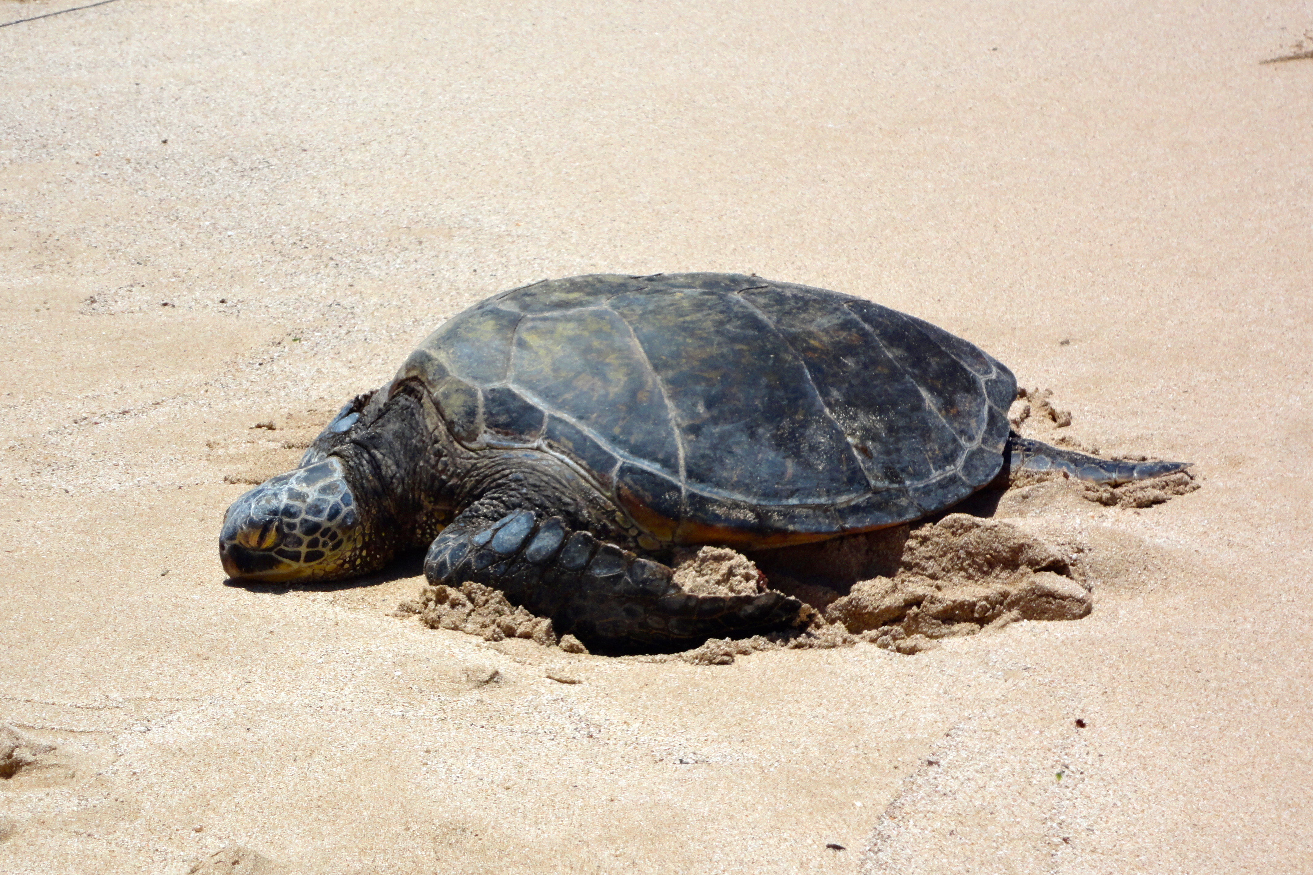 Oahu Spot Tours Sea Turtle